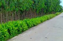 Đất rừng U Minh Cà Mau - DT:70000m2; Đã có trồng tràm nhiều tuổi.