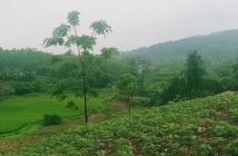 Chính chủ cần bán 20 sào đất view cực đẹp tại Huyện Ba Vì _ TP Hà Nội .