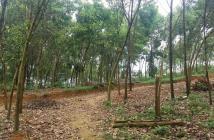 Bán gấp lô đất sổ đỏ chính chủ S5867m2 có 500m2 đất ở, Muỗi, Yên Bài, Ba Vì, HN.