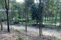 Cần bán S 5770m2 sổ đỏ chính chủ, gần hồ, Cư Yên, Lương Sơn, Hòa Bình, đất thoáng đẹp