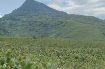 Bán 7200 đẹp có 102 tại Mình Quang, Ba Vì, HN. Đất thoải, view mê mẩn, giá rẻ.