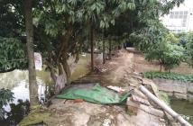 Cần bán trang trại 6000m2 ở Huyện Ứng Hòa, Hà Nội.