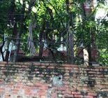 Bán gấp mảnh đất 240m thổ cư trục đường chính 38B Gia Sinh – Gia Viễn – Ninh Bình.